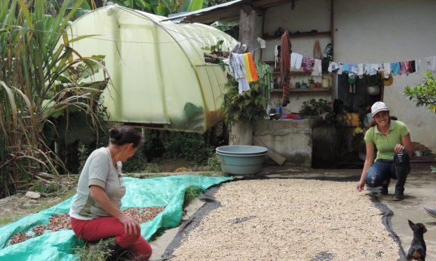 Iniciativas de mujeres con deshidratación solar y captación solar para el procesamiento de alimentos en una localidad del Páramo de Santurbán