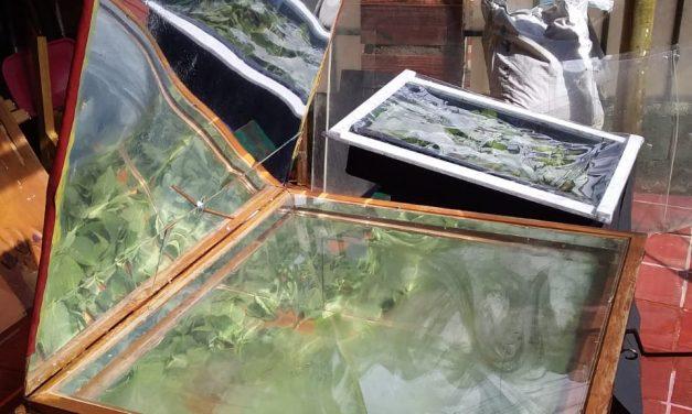 Deshidratación solar de hierbas aromáticas